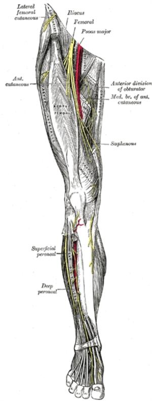 Tê bì vùng cẳng chân sau phẫu thuật tạo hình dây chằng chéo bằng gân chân ngỗng